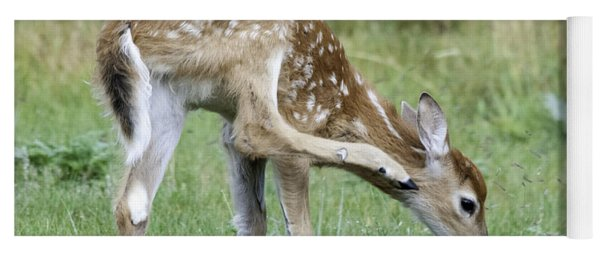 Yoga Mat featuring the photograph Itchy Fawn by Gary Beeler