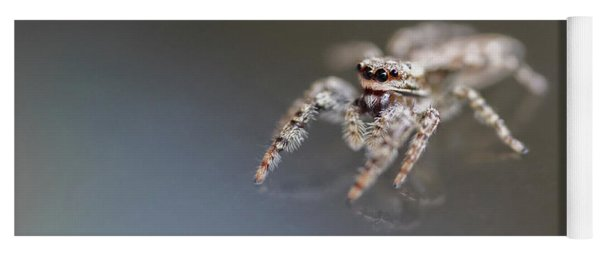 Jumping Spider On Glass Table Yoga Mat