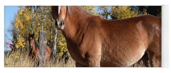 Horse Cr 511 Divide Co Yoga Mat