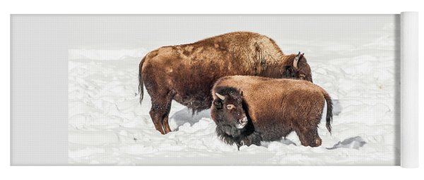 Juvenile Bison With Adult Bison Yoga Mat