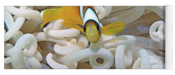 Juvenile Red Sea Clownfish, Eilat, Israel 3 Yoga Mat