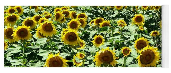 Kansas Sunflower Field Yoga Mat
