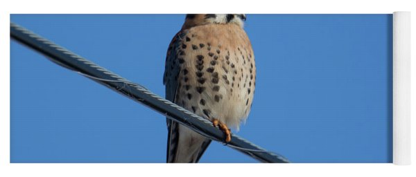Yoga Mat featuring the photograph Kestrel On A Wire by Craig Leaper