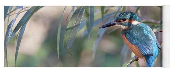 Kingfisher In Willow Yoga Mat