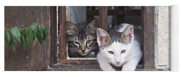 Kittens In Zuheros Yoga Mat