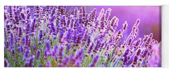 Lavender Flower Field At Sunset. Yoga Mat