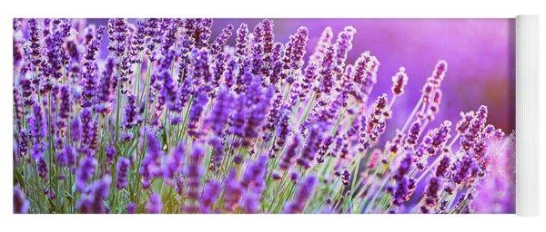 Lavender Flower Field At Sunset. Yoga Mat