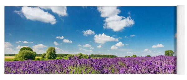 Lavender Flower Field In Full Bloom, Sunny Blue Sky Yoga Mat