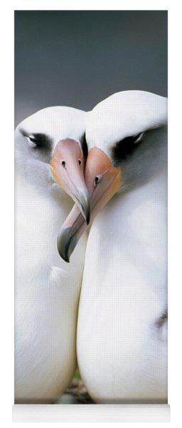 Laysan Albatross Phoebastria Yoga Mat
