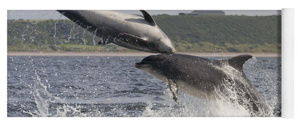 Leaping Bottlenose Dolphins - Scotland  #38 Yoga Mat