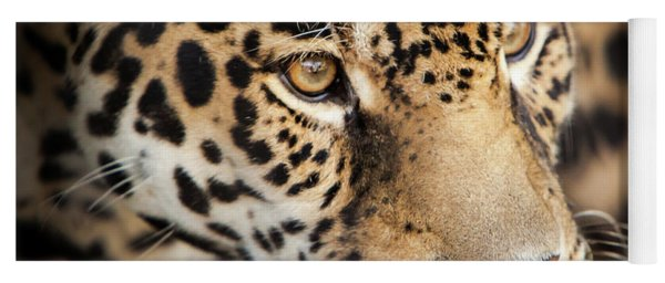 Yoga Mat featuring the photograph Leopard Face by John Wadleigh