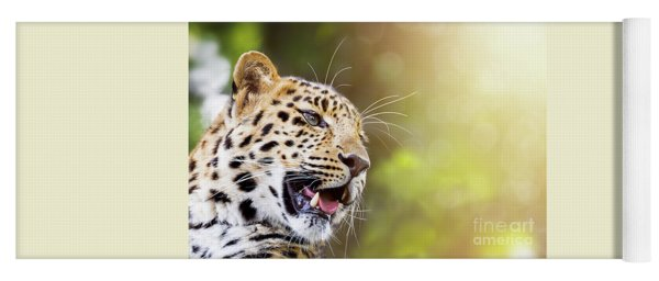 Leopard In Sunlight Yoga Mat
