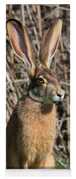 Lepus Californicus Yoga Mat