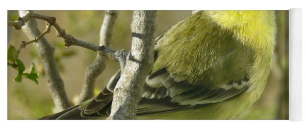 Lesser Goldfinch 1 Yoga Mat