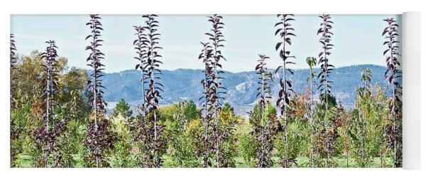 Life On A Tree Farm-foothills View #1 Yoga Mat