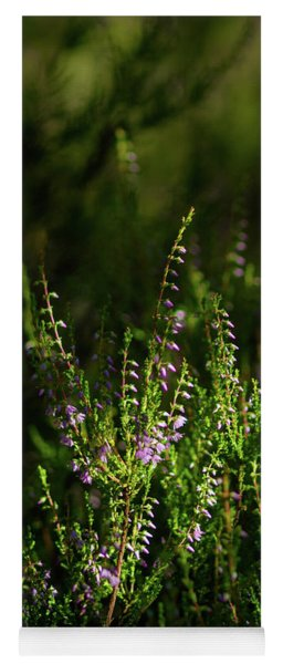 Light And Shadows On Common Heathers Yoga Mat