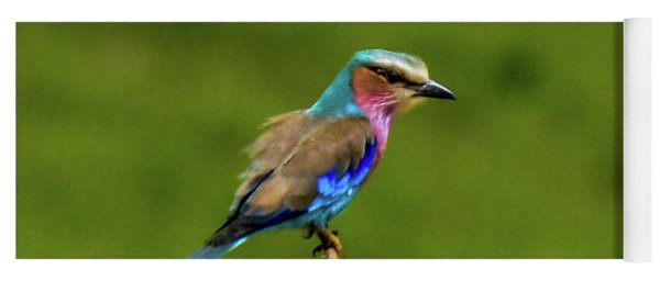 Lilac-breasted Roller Yoga Mat