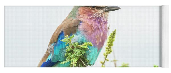 Lilac Breasted Roller. Yoga Mat
