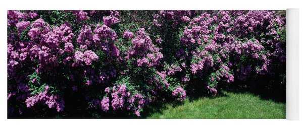 Lilac Flowers In A Garden, Grand Yoga Mat