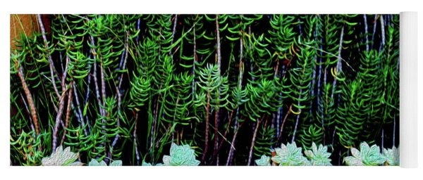 Line Of Succulents And Red Fence Yoga Mat