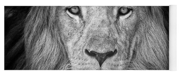 Yoga Mat featuring the photograph Lion 5716 by Traven Milovich