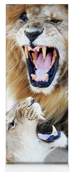 Lion And Lioness Aggression During Mating Yoga Mat