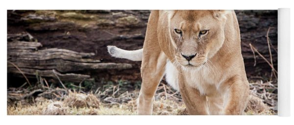 Yoga Mat featuring the photograph Lion Eyes by John Wadleigh