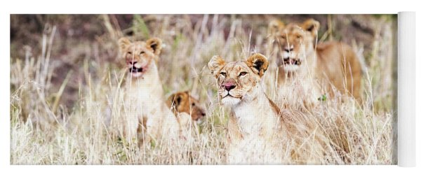 Lion Pride Lying In Tall Grass Yoga Mat