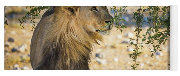Lion Under Acacia Tree Yoga Mat