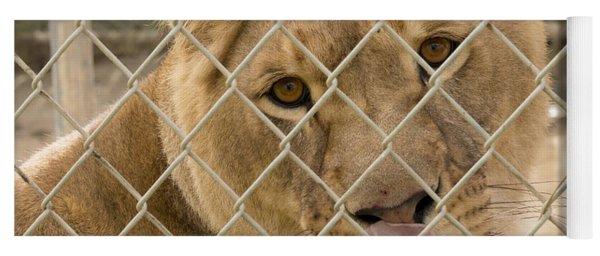 Lioness Licks Yoga Mat