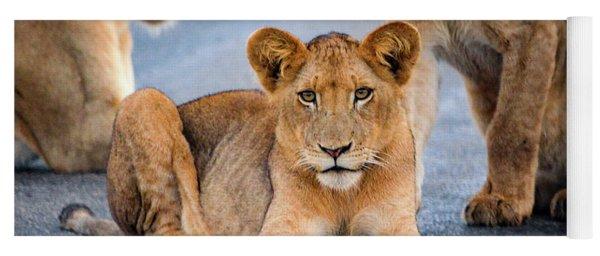 Lions Stare Yoga Mat