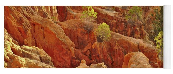 Little Pine Trees Growing On The Valley Cliffs Yoga Mat