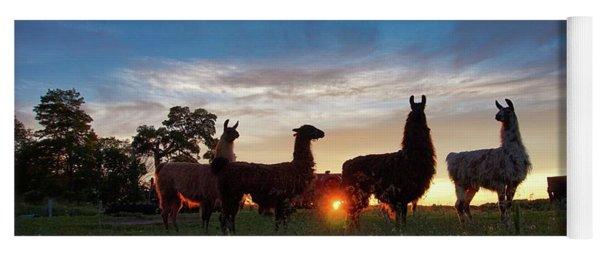 Llamas At Sunset Yoga Mat