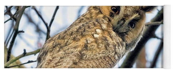 Long Eared Owl 1 Yoga Mat