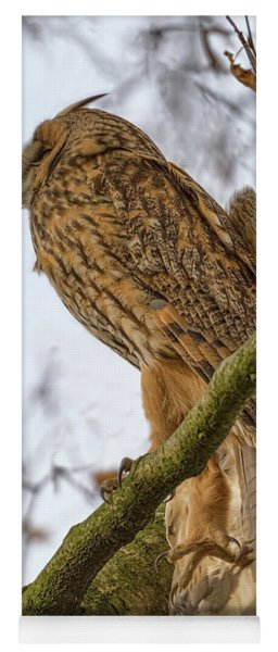 Long Eared Owl 2 Yoga Mat