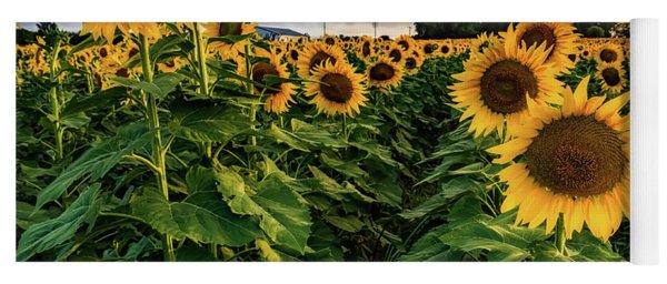 Long Island Sunflowers  Yoga Mat
