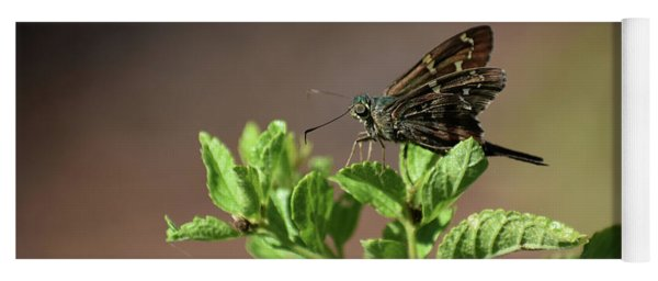 Long Tailed Skipper Yoga Mat