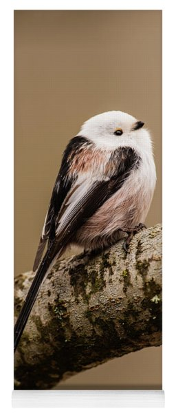 Long-tailed Tit On The Oak Branch Yoga Mat
