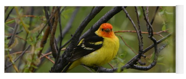 Looking At You - Western Tanager Yoga Mat