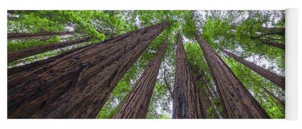 Looking Up Redwood Trees Yoga Mat