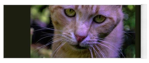 Lovey Feral Cat Portrait 0369a Yoga Mat