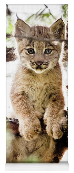 Lynx Kitten In Tree Yoga Mat