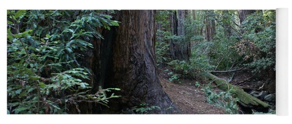 Magical Path Through The Redwoods On Mount Tamalpais Yoga Mat