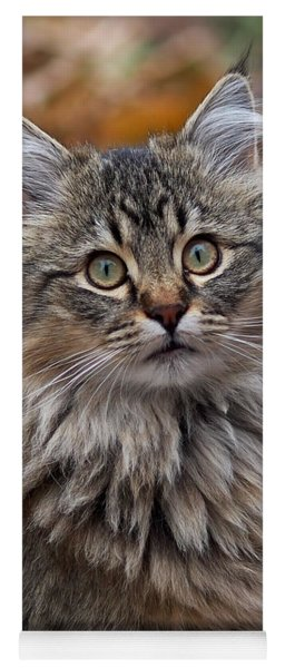 Maine Coon Cat Yoga Mat