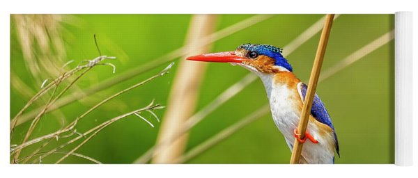 Malachite Kingfisher Yoga Mat