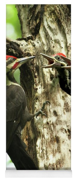Male Pileated Woodpecker At Nest Yoga Mat