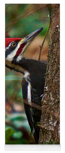 Yoga Mat featuring the photograph Male Pileated Woodpecker by Robert L Jackson