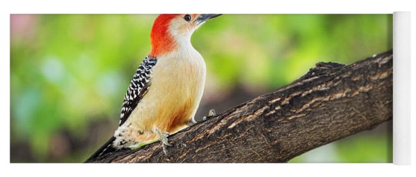 Male Red-bellied Woodpecker Yoga Mat