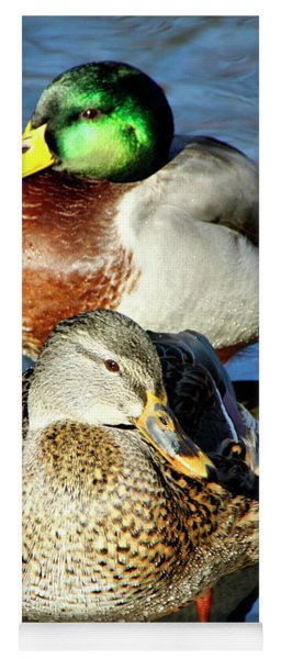 Mallard Couple Yoga Mat