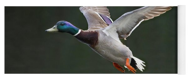 Mallard Drake In Flight Yoga Mat